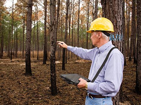 Despacho De Servicios en Campo Para El Sector Forestal